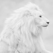 Június 19-én fehér övvizsga az Óbuda Dojóban